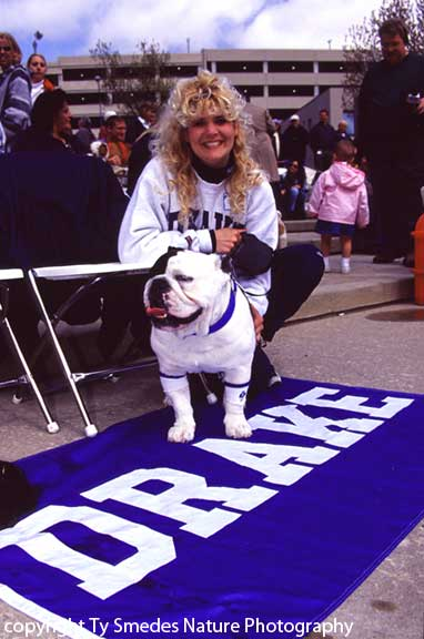 Most Beautiful Bulldog Contest at the Drake Relays, Des Moines IA